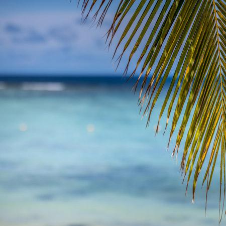 Safe place beachcomber 2021
